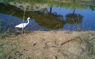 L'ambiente acquatico favorisce la biodiversità