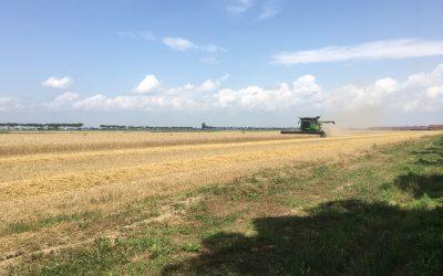 Trebbiatura del grano