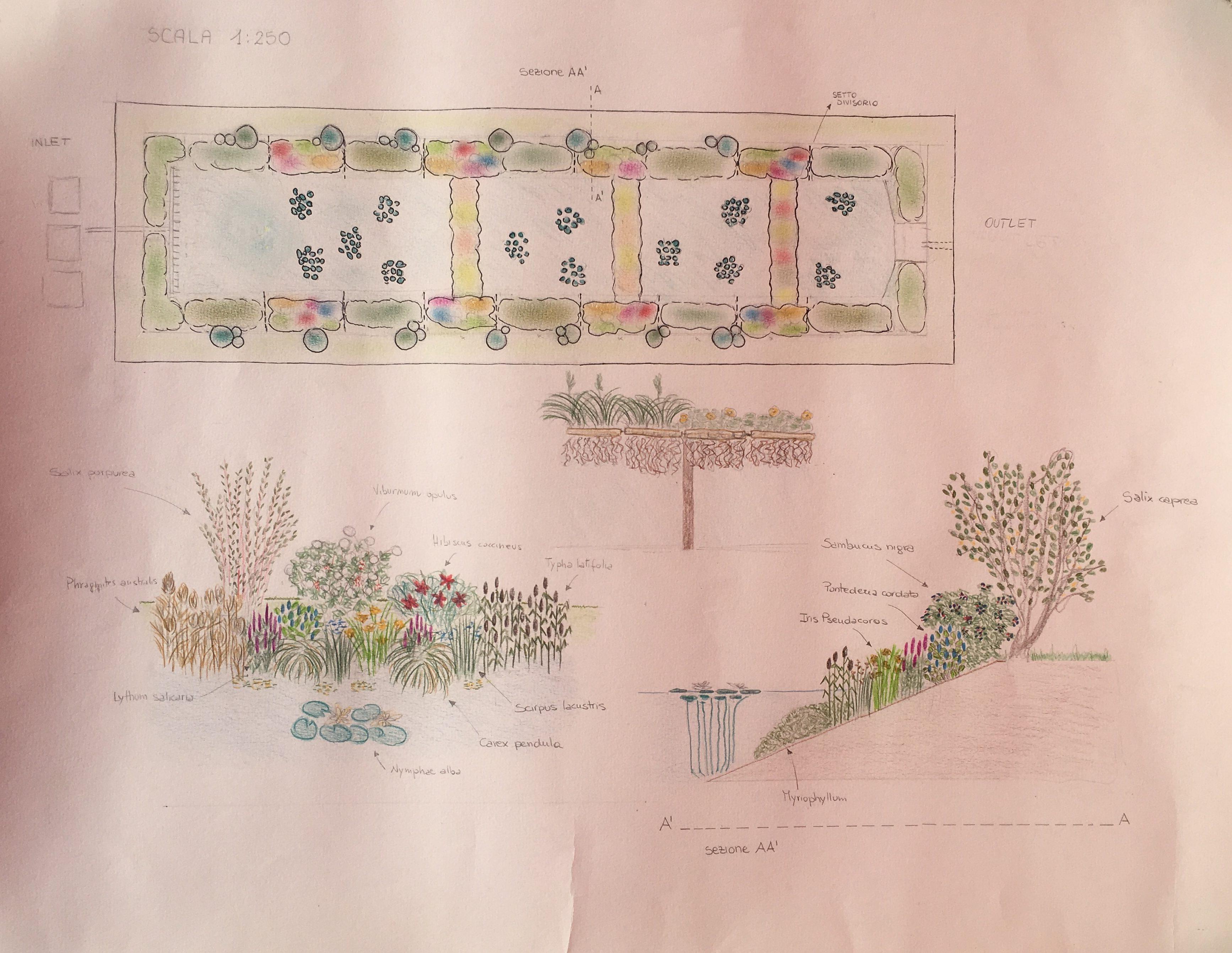 Progetto lago fitodepurazione