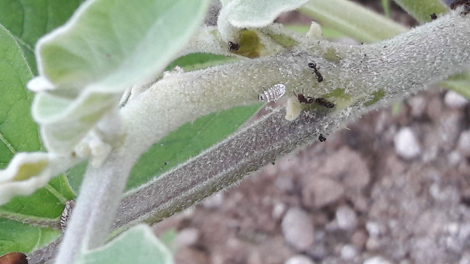 lancio insetti serra marzo 2018 7