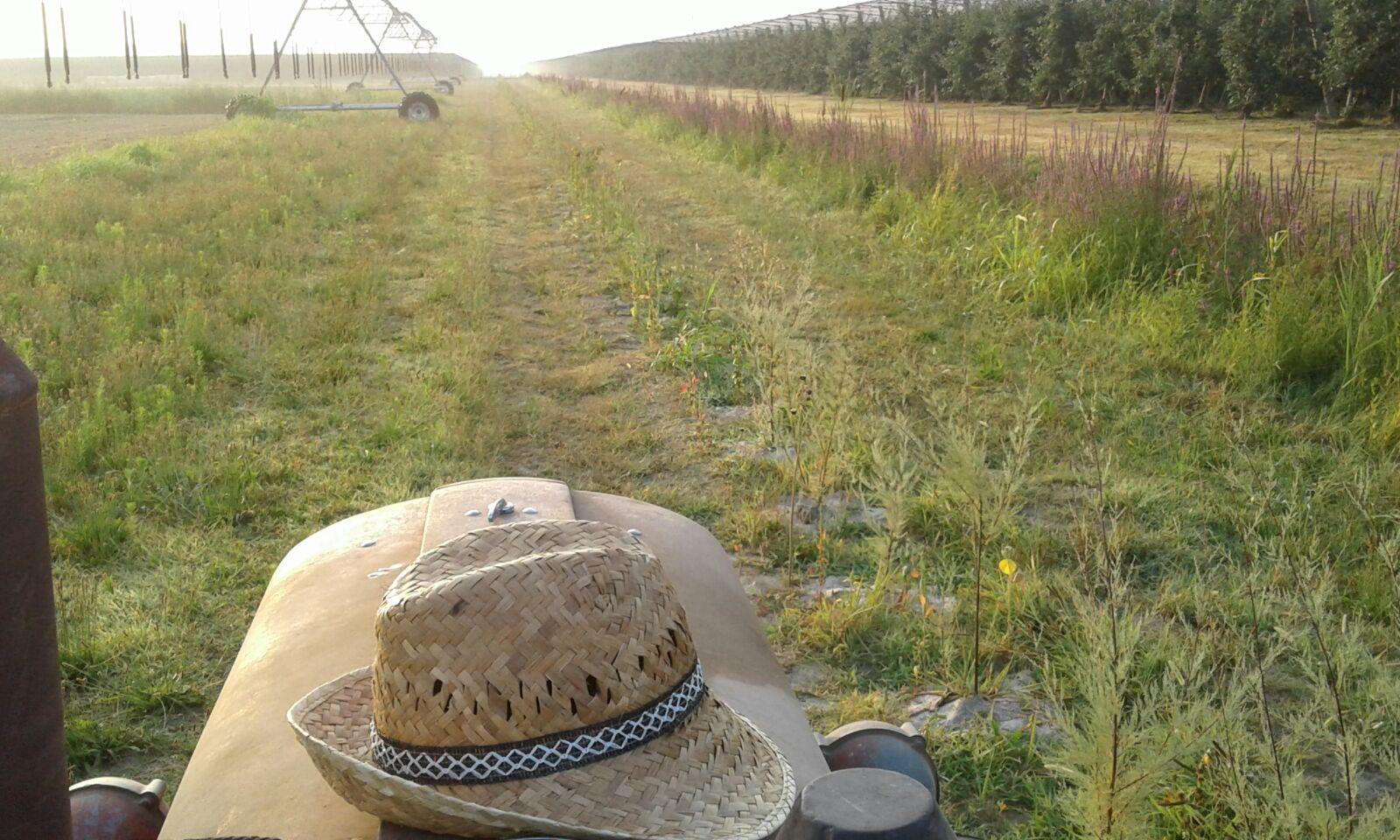 L'irrigazione delle siepi a Cortellazzo