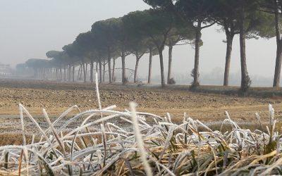 L'Oca Lombardella e la fine dell'inverno