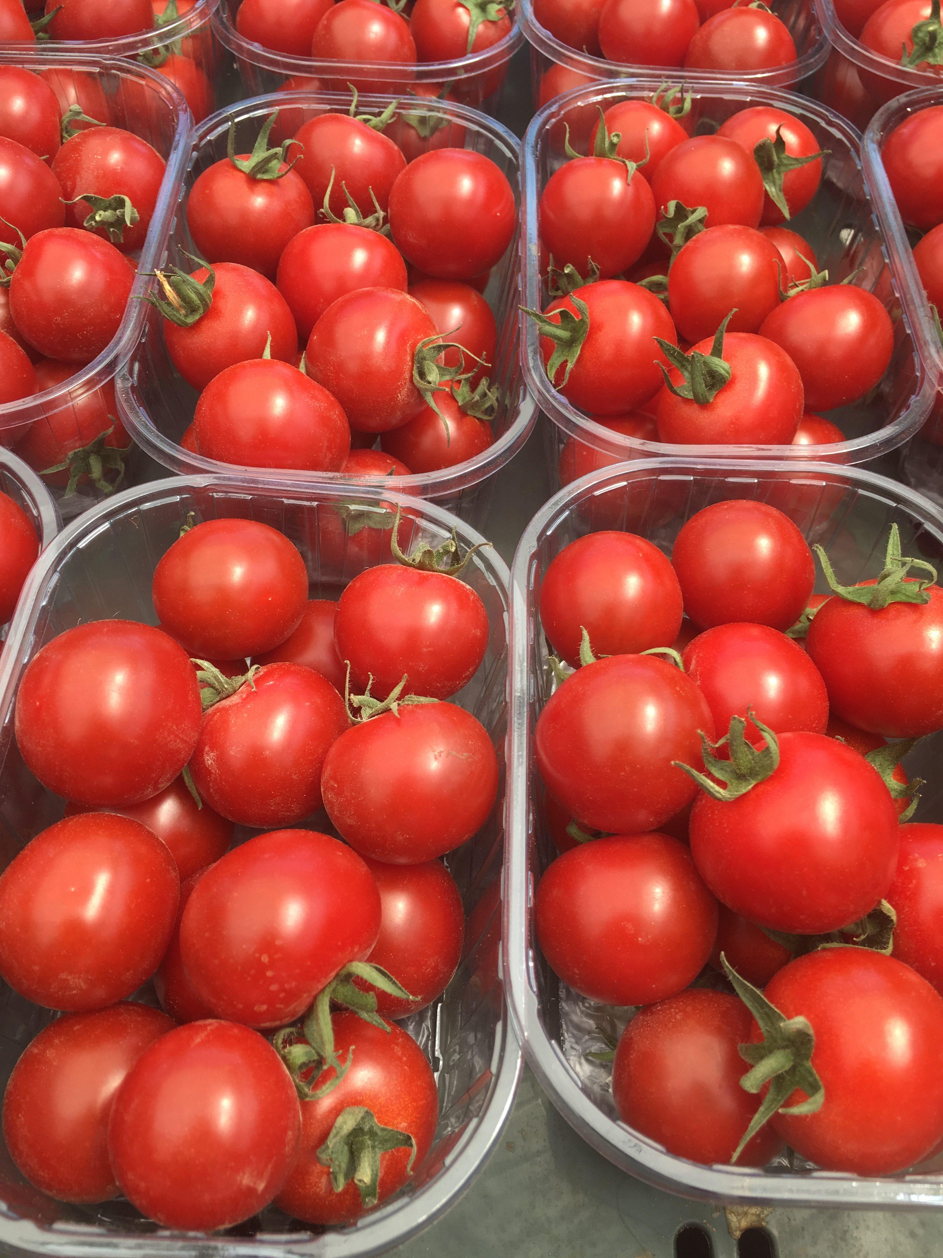 Pomodori ciliegino 4